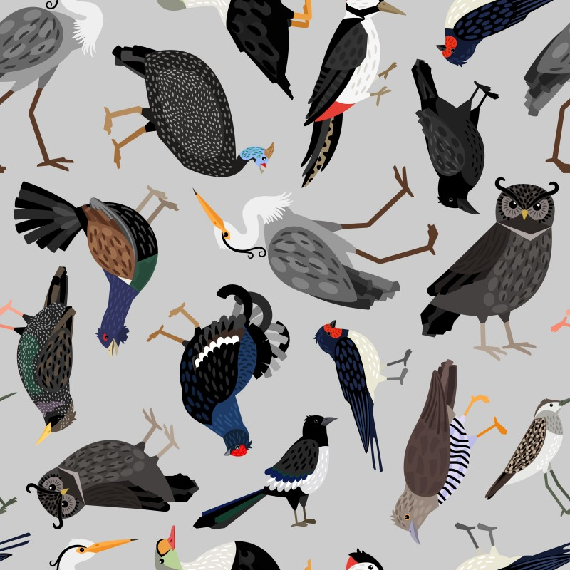 Stand out bird species AGA Cover.