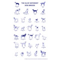 Dog IQ Tea Towel