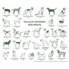 Dog IQ Placemat