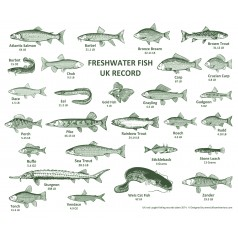 Fishing Records Placemat