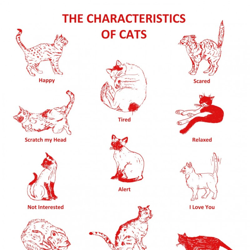 Cat Characteristics Tea Towel
