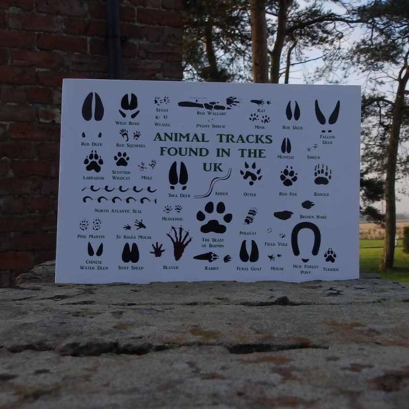 Greetings Card - Animal Tracks found in UK