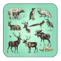 Arctic Animal Coaster