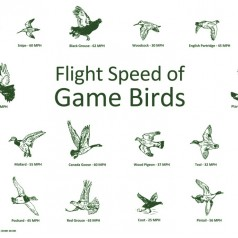 Greetings Card - Game Birds