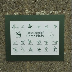 Flight Speed of Game Birds Print